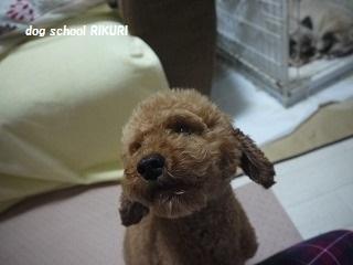保護犬さん。_a0284100_9565811.jpg