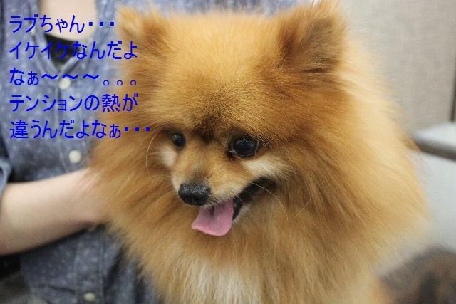 b0130018_7522456.jpg