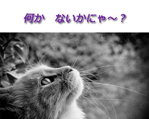 f0179947_133589.jpg