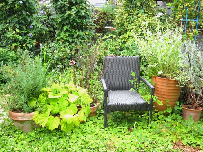 夏の庭_d0129249_19445094.jpg