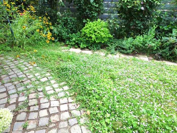 夏の庭_d0129249_19473213.jpg