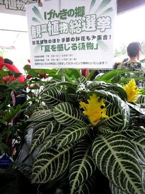 夏を感じる植物_c0141652_18322312.jpg