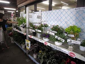 夏を感じる植物_c0141652_18324330.jpg