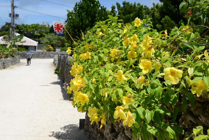 日本で一番おすすめの旅行地~沖縄・竹富島写真_e0171573_22211331.jpg