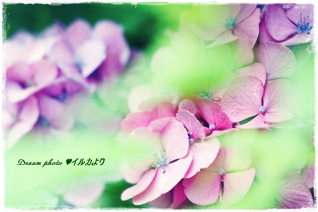 f0304384_7283686.jpg