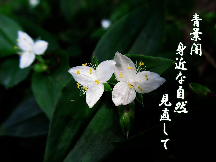 f0137096_16171952.jpg