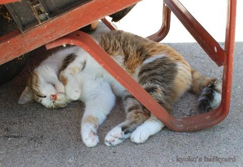 猫のお手伝い 2_b0253205_2425421.jpg