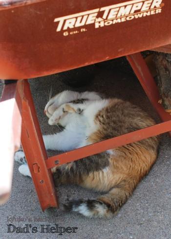 猫のお手伝い 2_b0253205_242614.jpg