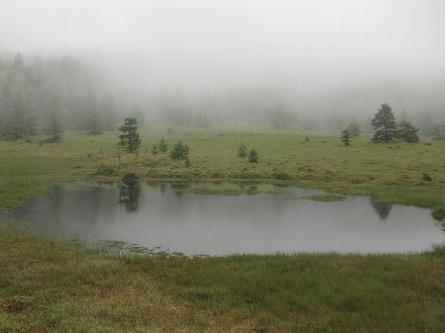 池の平湿原_a0138609_6372250.jpg