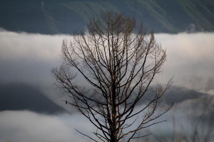 2014.7.6 富士山と野鳥・北富士演習場・ノビタキ、ホオアカ、コムクドリ_c0269342_09460668.jpg