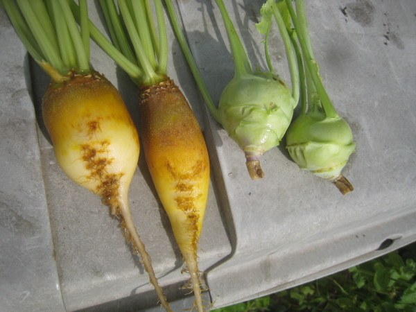 収穫物色々、夕飯も色々_e0121558_22435611.jpg