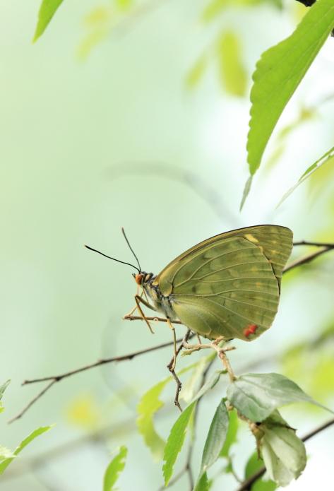 ■■ 籠の中の蝶 ~2~ ■■_c0195662_2232744.jpg
