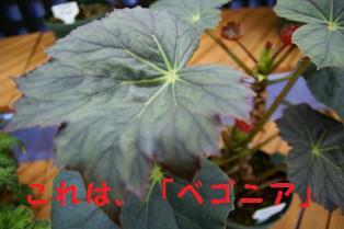 f0203094_1538163.jpg