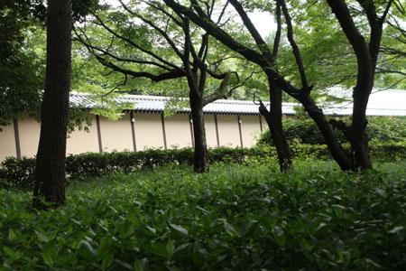 京都御苑散策_e0048413_21141269.jpg