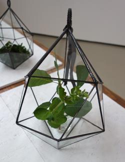 温室は温室であって温室ではない_a0017350_23395977.jpg