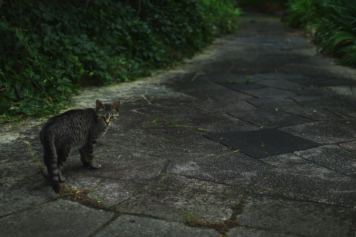 猫にゃん_f0021869_2350494.jpg