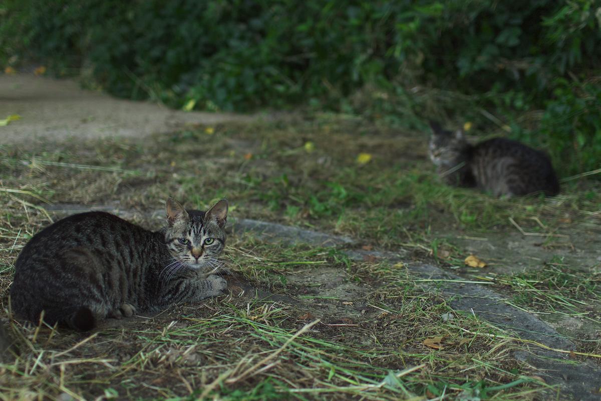 猫にゃん_f0021869_2351022.jpg