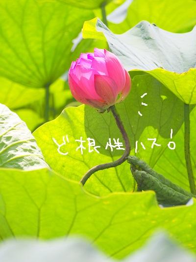 b0092580_3491998.jpg