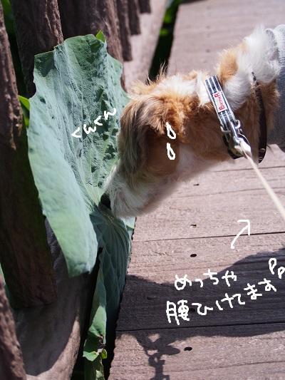 b0092580_349377.jpg