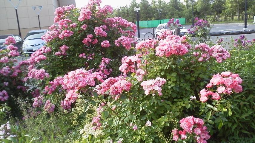 バラの季節_f0316507_09555393.jpg