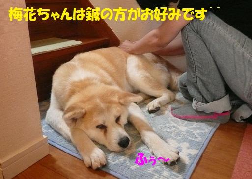 f0121712_15305072.jpg