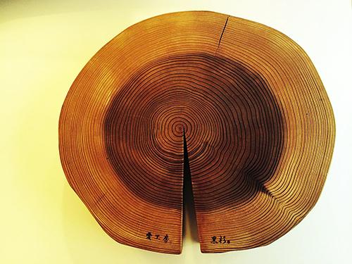 樹の性格_e0243332_17421982.jpg