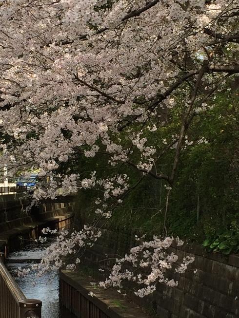 桜2014_e0189465_841506.jpg