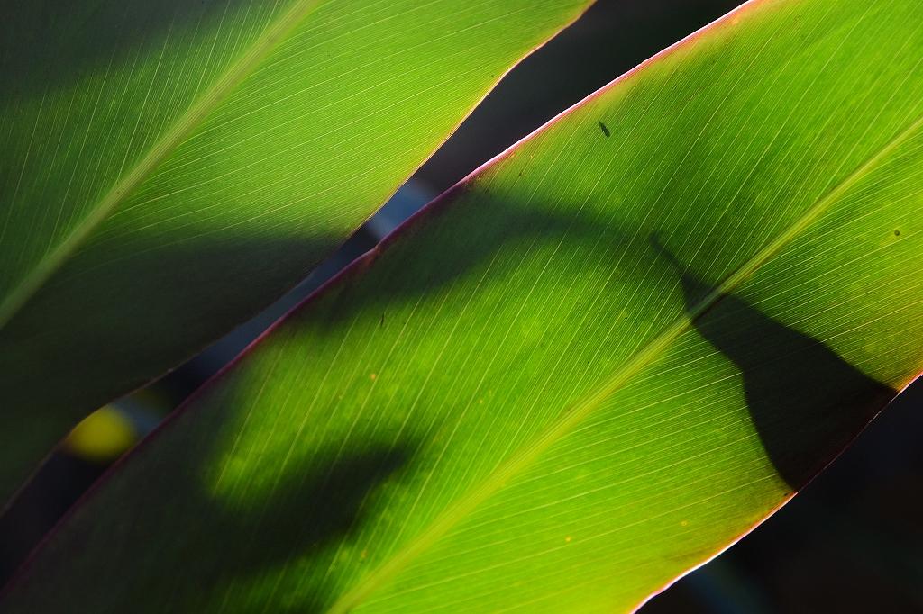 Sydney Light &Shadow by FUJINON 18~135mm_f0050534_09462911.jpg