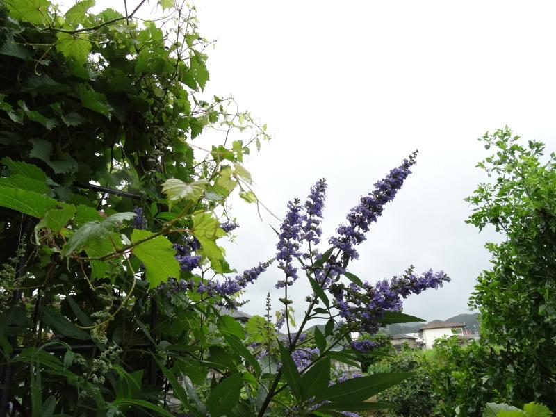 台風8号は少し おとなしくなったようだ_c0108460_15060706.jpg