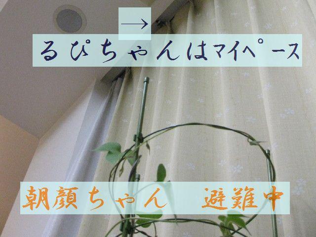 b0158061_2243415.jpg
