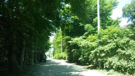 かすみ園通り_b0106766_2284360.jpg