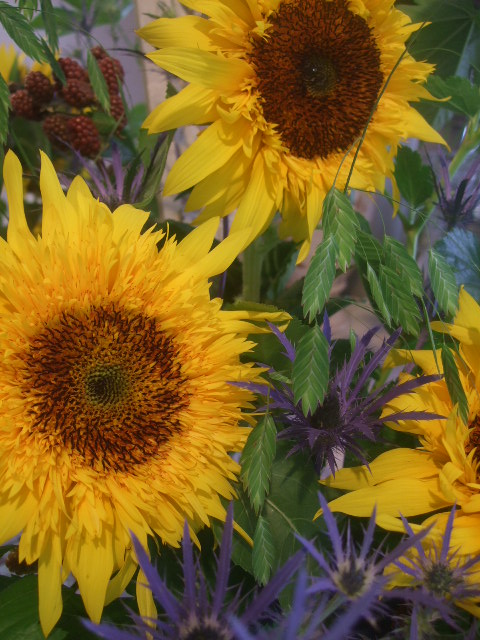 オークリーフ花の教室(トルコキキョウとひまわり)_f0049672_187532.jpg