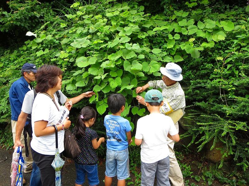 ★植物感察ツアーの報告_e0046474_12473838.jpg
