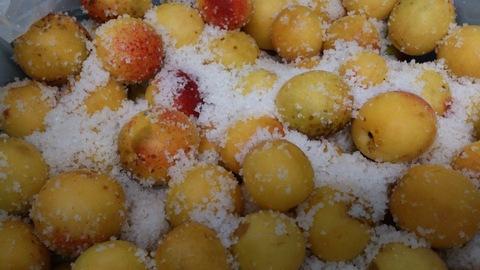 安塚の塩で梅干しと塩レモン。_d0182179_1844524.jpg