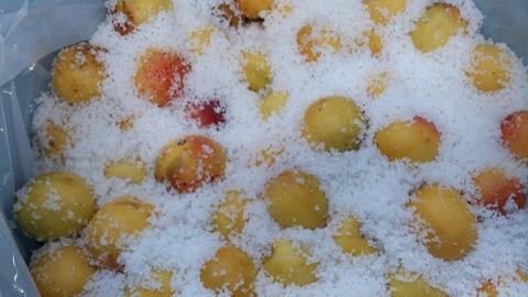 安塚の塩で梅干しと塩レモン。_d0182179_18445632.jpg