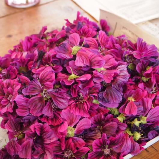 コモンマロウのお花の収穫_a0292194_11132626.jpg
