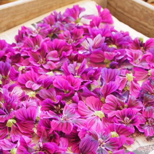 コモンマロウのお花の収穫_a0292194_11152217.jpg