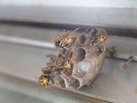 女王蜂ハチ子のその後。_c0108595_0142789.jpg