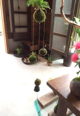 苔玉・盆栽教室の空き状況のご案内_d0263815_17262750.jpg