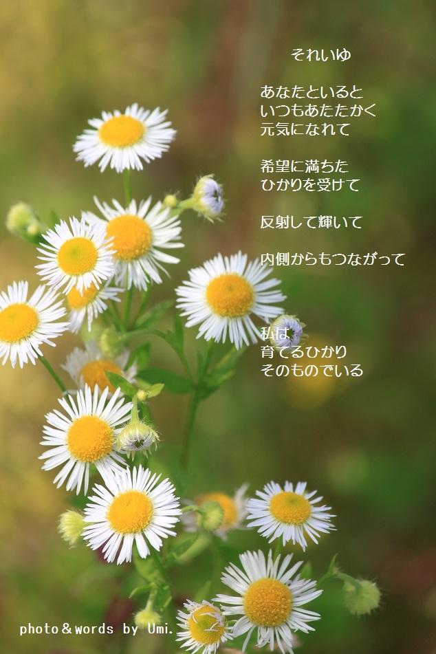 f0351844_10515046.jpg
