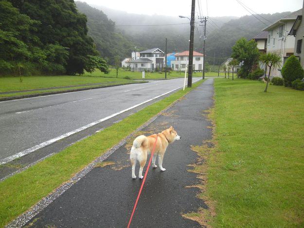 '14,7,11(金)台風去って猛暑日に~!_f0060461_9165551.jpg