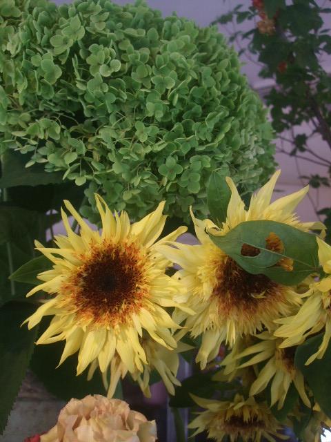 オークリーフ(7月の花たち)_f0049672_14463979.jpg