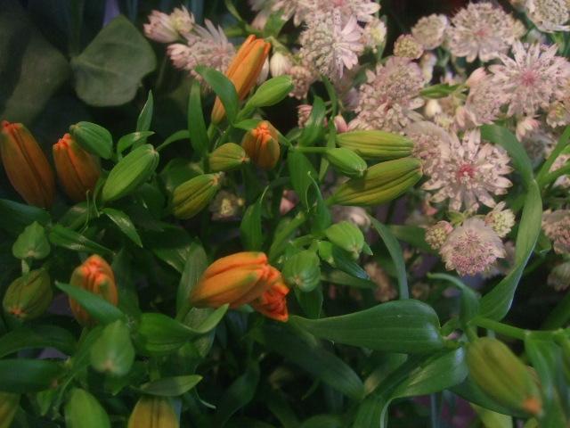 オークリーフ(7月の花たち)_f0049672_14465610.jpg