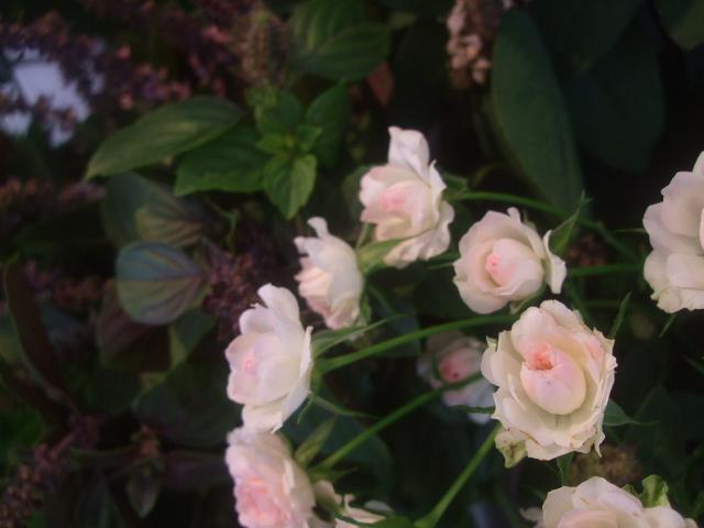 オークリーフ(7月の花たち)_f0049672_1447277.jpg