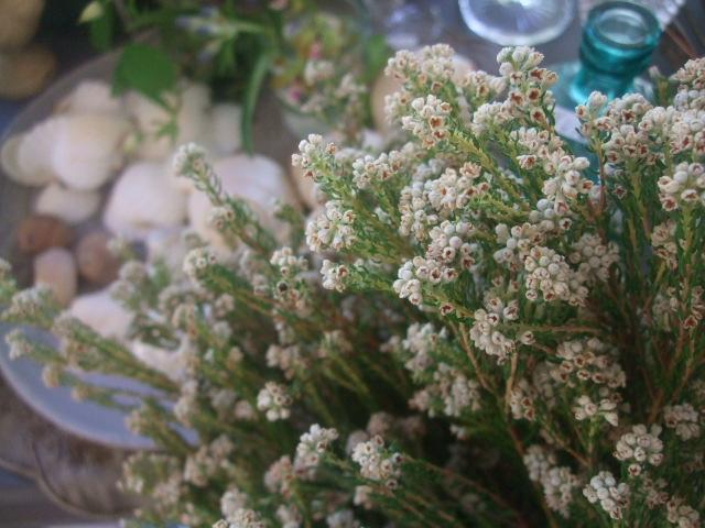 オークリーフ(7月の花たち)_f0049672_1447314.jpg