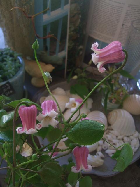 オークリーフ(7月の花たち)_f0049672_14474312.jpg