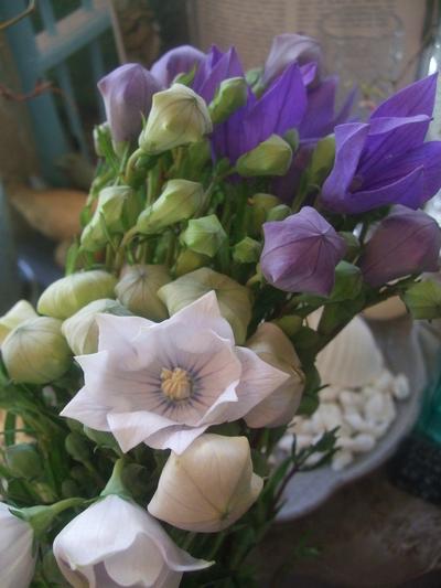 オークリーフ(7月の花たち)_f0049672_14474929.jpg