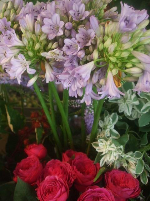 オークリーフ(7月の花たち)_f0049672_1447990.jpg
