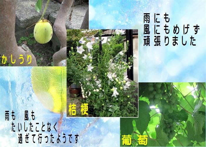 f0003174_15274312.jpg