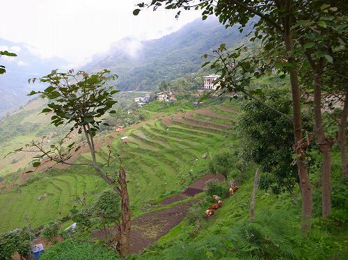 ブータン王国への旅  7_e0221697_23402087.jpg